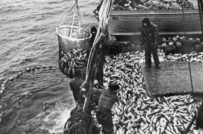 План по обогащению бюджета ссср рыбной промышленностью