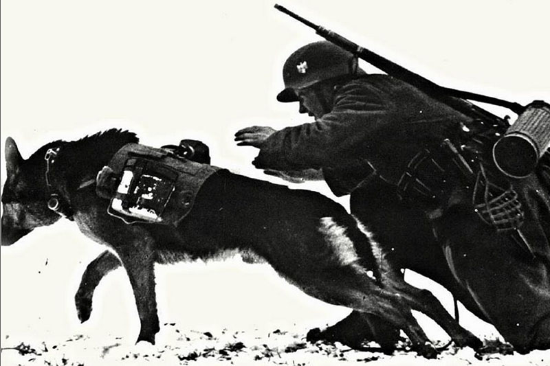Овчарка Дауфмана — собака, характеризовавшаяся особой свирепостью, агрессивностью.