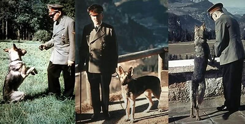 В экспериментах кинолога участвовала собака Адольфа Гитлера, которую звали Блонди