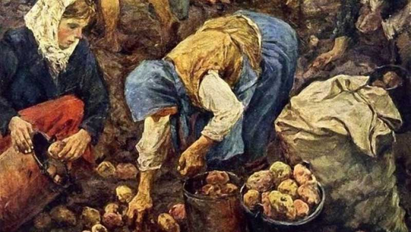 Как картофель привезли в Россию