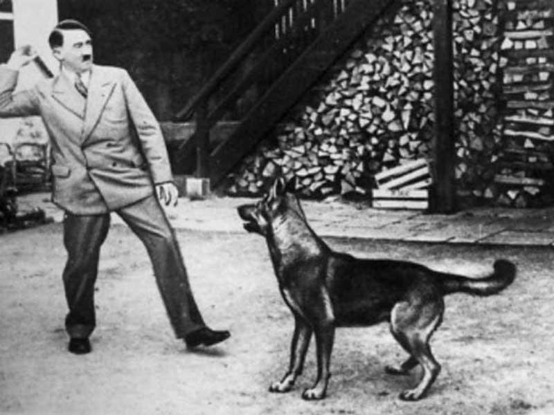 У самого Гитлера тоже был четвероногая любимица по кличке Блонди