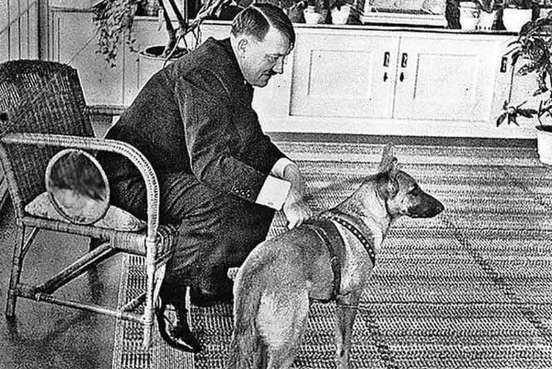 увлечение собаками и породило у фюрера идею создать спецшколу для собак.
