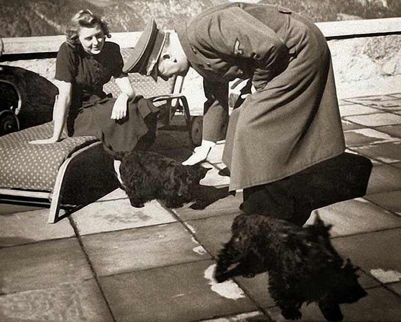 Еще в 19 веке немецкие ученые были уверены в том, что собаки имеют такие же интеллектуальные способности, как и люди.