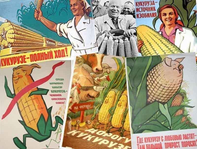 При правлении Хрущева кукуруза едва не привела сельское хозяйство СССР к катастрофе.